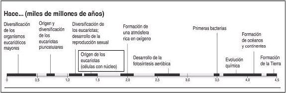 PENAL14ARBOL1-.JPG