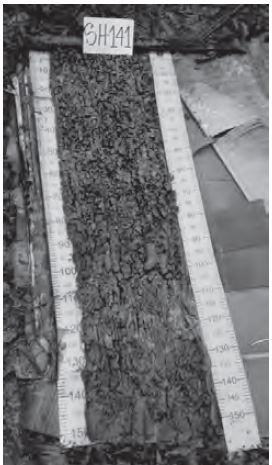 Figura 21 Perfil tomado con barreno de aleta