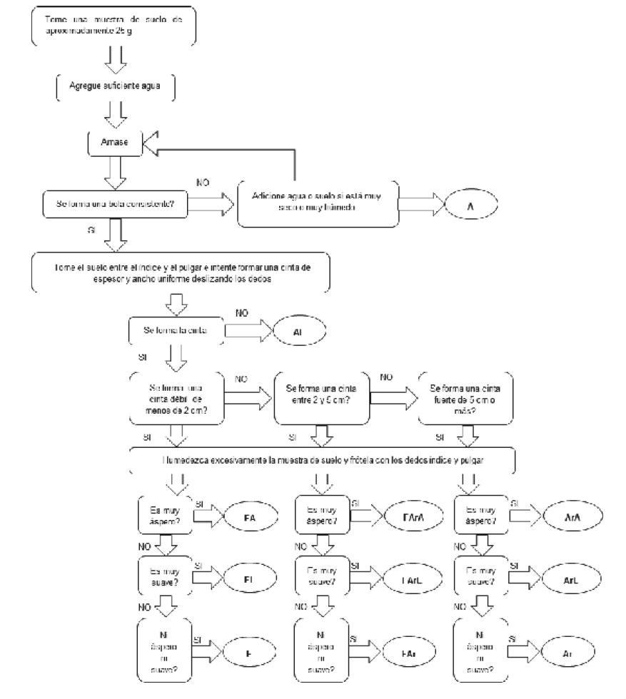 Figura 7 Procedimiento para toma de textura método organoléptico