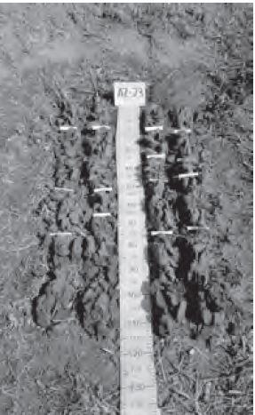 Figura 19 Separación de horizontes en perfil tomado con barreno