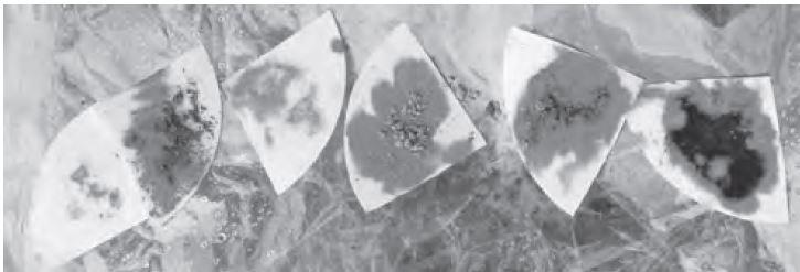 Figura 10 Reacción al Fluoruro de Sodio que muestra la evidencia